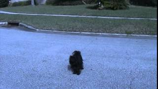 Black And White Dogs Running Loose In Jacksonville Fl Jan 2015