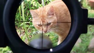 Cara memasang telescope senapan angin canon videourl.de