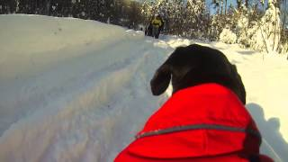 Gopro Snowball Dachshund | Crusoe The Dachshund Crazy For Snowballs