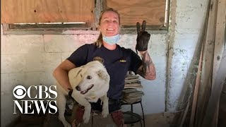 Dog trapped behind wall rescued and reunited with family