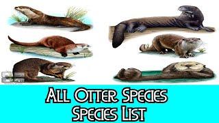 All Otter Species - Species List
