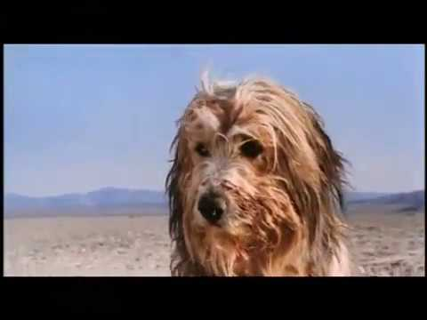 A BOY AND HIS DOG   Trailer - YouTube