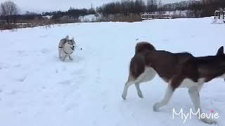 Собака трясет попой