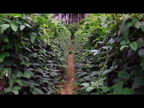 Vegetable Plantation at Port Blair, Andaman and Nicobar