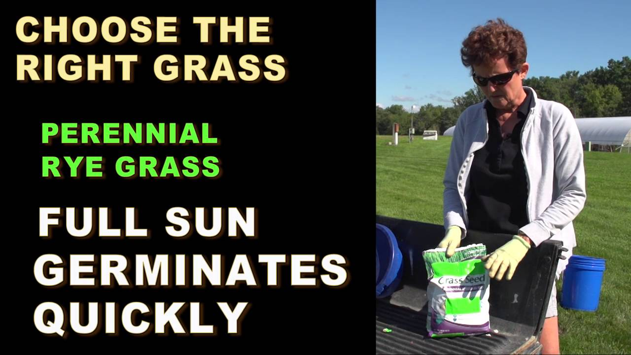 how to choose grass seed