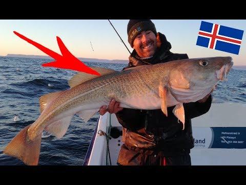 Neuer PERSONAL BEST? | Angeln in Island #3 | hechtundbarsch.de