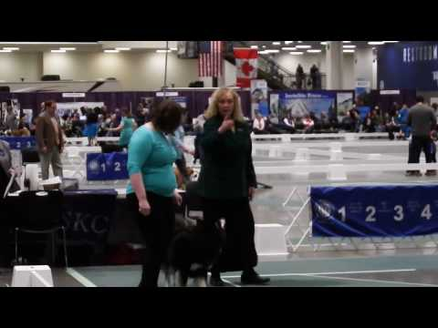 Lord at Seattle Kennel Club Dog Show - March 12 2017