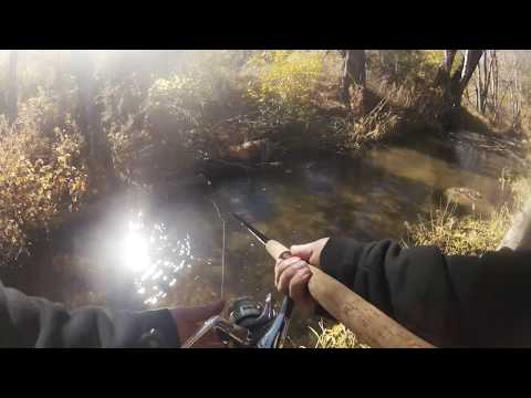 Trout Fishing In A Stream In Big Bear, Ca