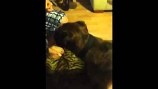 My Dog Eats A Lemon (funny)