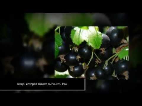 Смородина при сахарном диабете (черная и красная) - YouTube