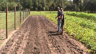Planting Mustard Greens
