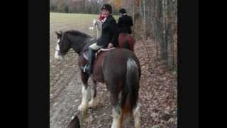 Mystique - 16.3H 2004 Clydesdale mare, maiden hunt with Colonial Fo...
