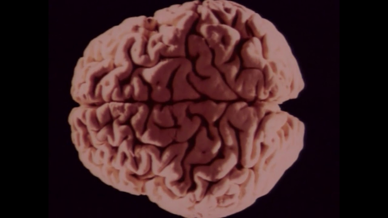 The Brain Part 13 Discovery Channel Body Atlas Youtube