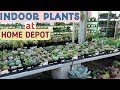 INDOOR PLANTS YOU CAN BUY AT HOME DEPOT