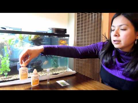 Goldfish Water Quality Testing