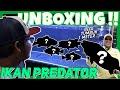 Unboxing Ikan Predator Dari Benua Amerika Sampai  M  Mp3 - Mp4 Download