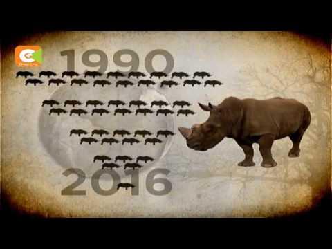 Kenya objects to trade in ivory, rhino horns stockpile