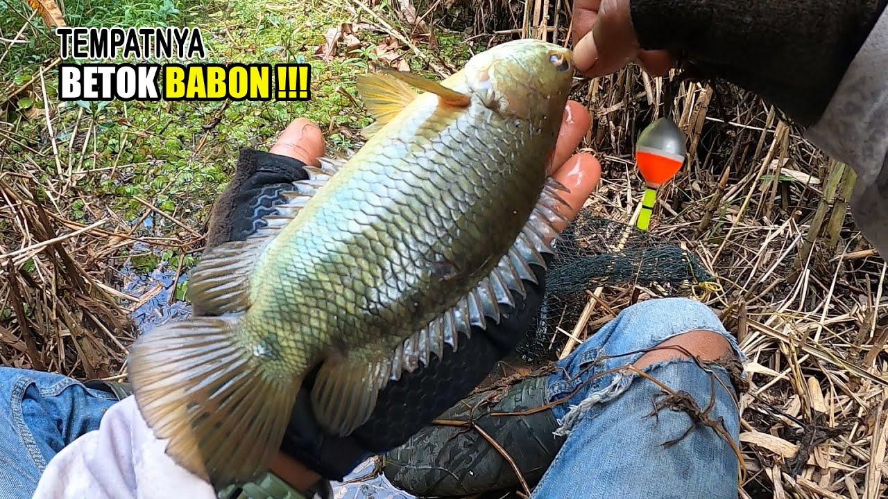 Download Makmurnya pemancing ini jika dapat banyak strike tak butuh lama #SG-212