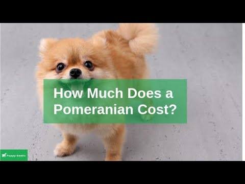 Pomeranian Dog Price and Facts