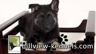Hillview Kennels Video | Pet Services In Nashville