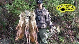 Fastest 3 Coyote BowHunting Kill Shots Ever  -  Lumenok Lighted Nock