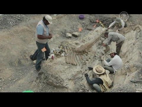 Cохранившийся хвост динозавра откопали в Мексике (новости)