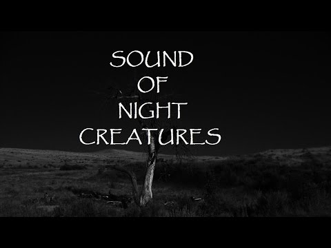 The Soothing Sound of Night Creatures: Owls, Bats, Cats, and more.