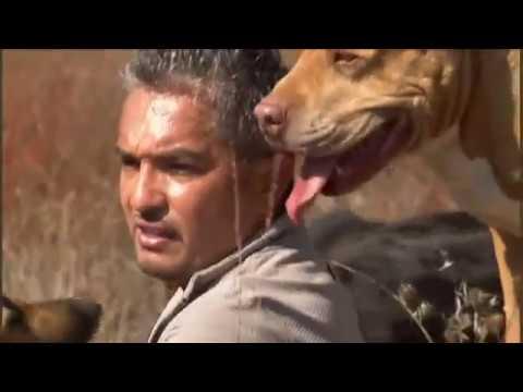 El encantador de perros segunda temporada episodio 18 ((2 x 18))