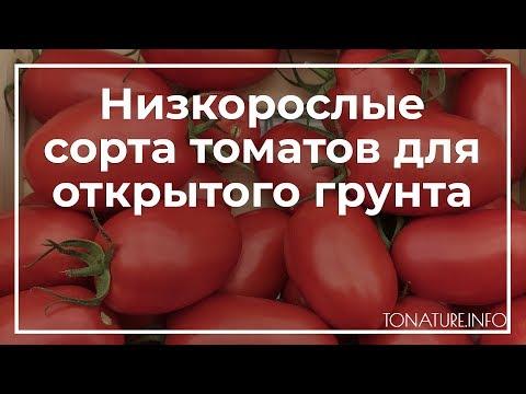 Низкорослые сорта томатов для открытого грунта | toNature.Info | черенкование | размножение | выращивание | справочник | пересадка | огородные | комнатных | комнатные | растения | растений