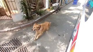 Dog Chases Ambulance Carrying Its Owner to Hospital
