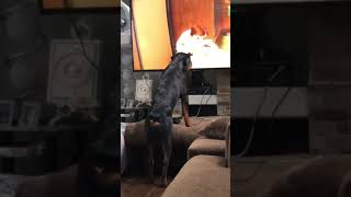 Hund reagiert auf cartoon-Hund auf TV