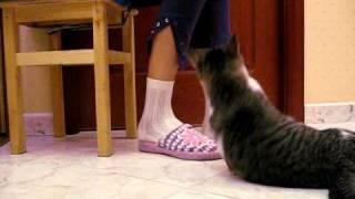 Дрессировка кота(, 2010-11-05T04:13:38.000Z)