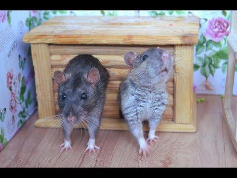 Лайфхаки для грызунов | крыс