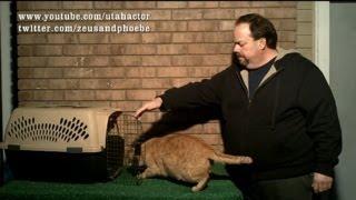 Crate Training Your Cat, Part 2