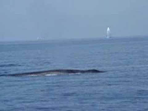 5 whales in the Mediterranean
