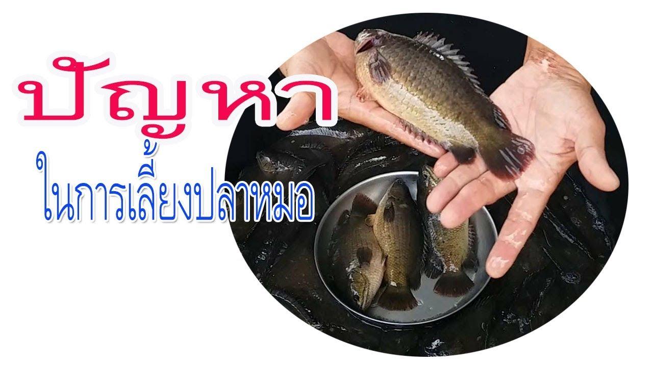 การเลี้ยงปลาหมอในบ่อซีเมนต์,บ่อปูน