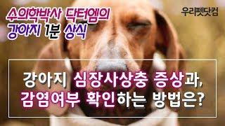 강아지 심장사상충 증상과 감염여부 확인하는 방법은?