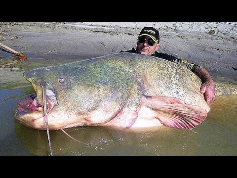 11 BIGGEST Fish Ever Caught