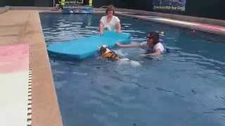 Cavalier King Charles Spaniels Swimming & Playing In Pool On Pool Floats Having Fun!!!!