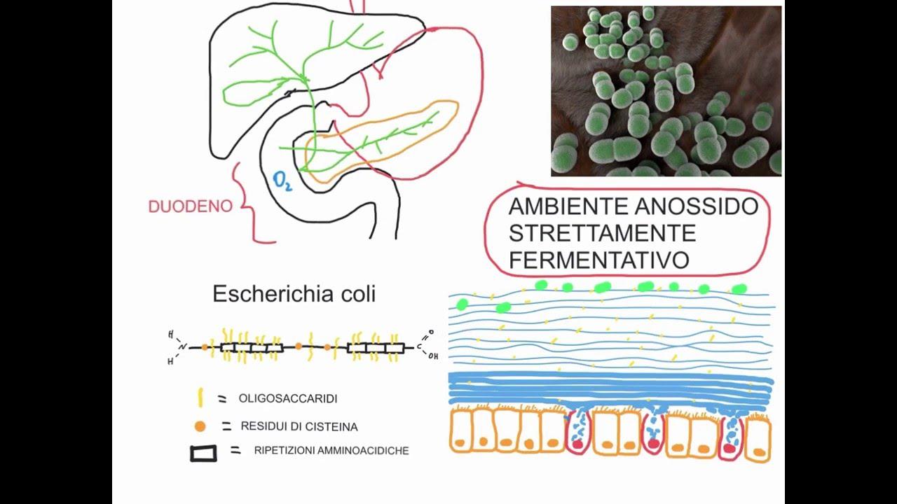 determinarea microbiologiei helmintelor