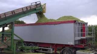 Maisüberladen auf LKWs mit mobilem Transportband