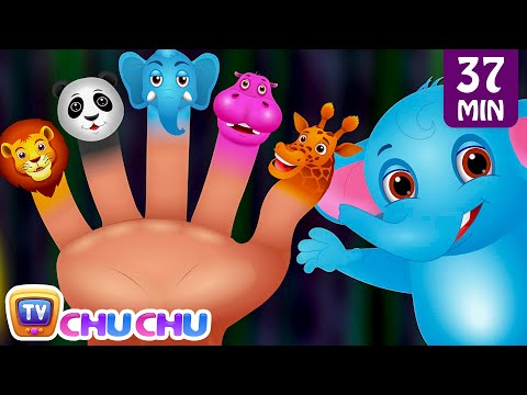 Finger Family Nursery Rhymes | Animal Finger Family Songs Co