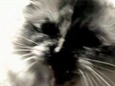 Mentally Imbalanced Cat | My Cat From Hell