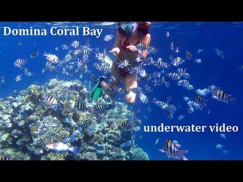 Underwater in Domina Coral Bay, 2017
