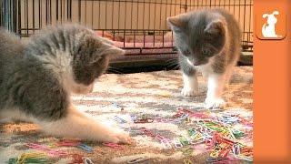 Cutest Rescue Kittens Handle Your Paperwork  Kitten Love