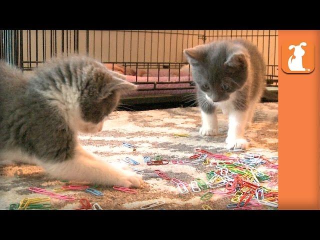 Cutest Rescue Kittens Handle Your Paperwork - Kitten Love