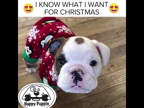 I Know What I Want For Christmas!