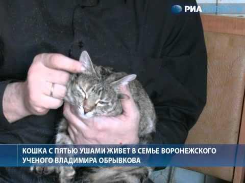 Ответы Кастрированный кот может заниматься сексом с кошкой?