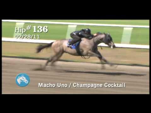 2009 Macho Uno Colt Forecon Breeze Video
