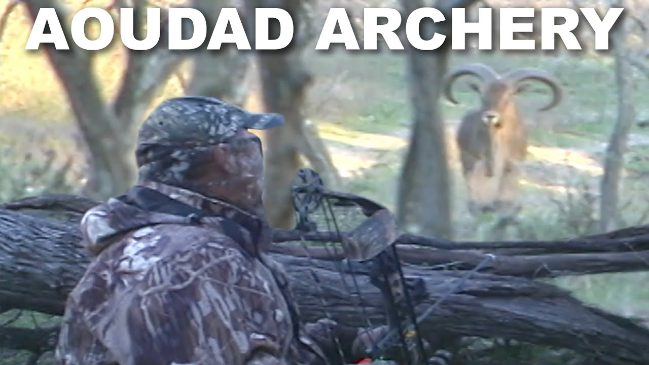 BOW HUNTING for Aoudad   Throwback